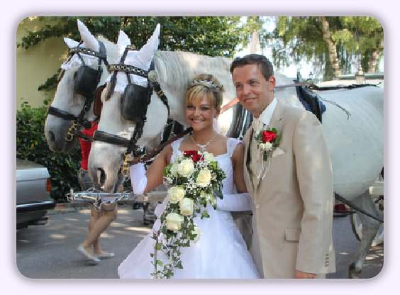 horse and carriage on wedding day